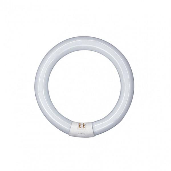 Tubo LED circular G10q 300mm 20W Blanco Frío